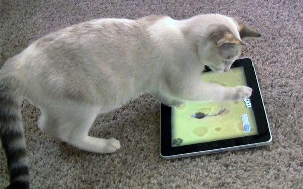 Got a cat? Theres an app for that