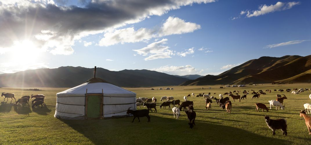 Traditional landscape in Mongolia with <i>ger</i> and livestock