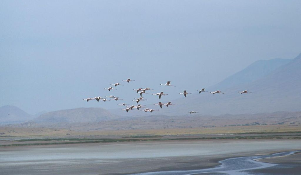 Flamingos flying over Lake Natron.