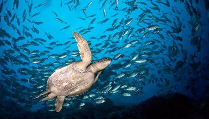Some Ocean Populations Declined by Nearly 50 Percent Between 1970 and 2012