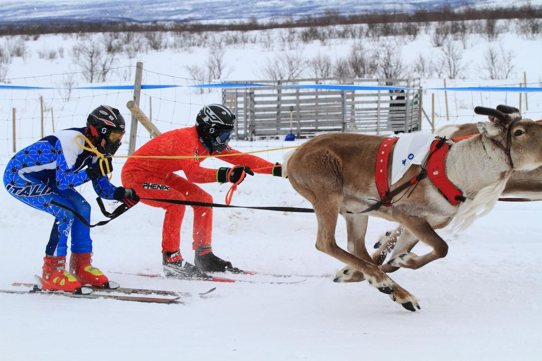 c93e3e6b64f9c In Northern Norway, Reindeer Racing and a