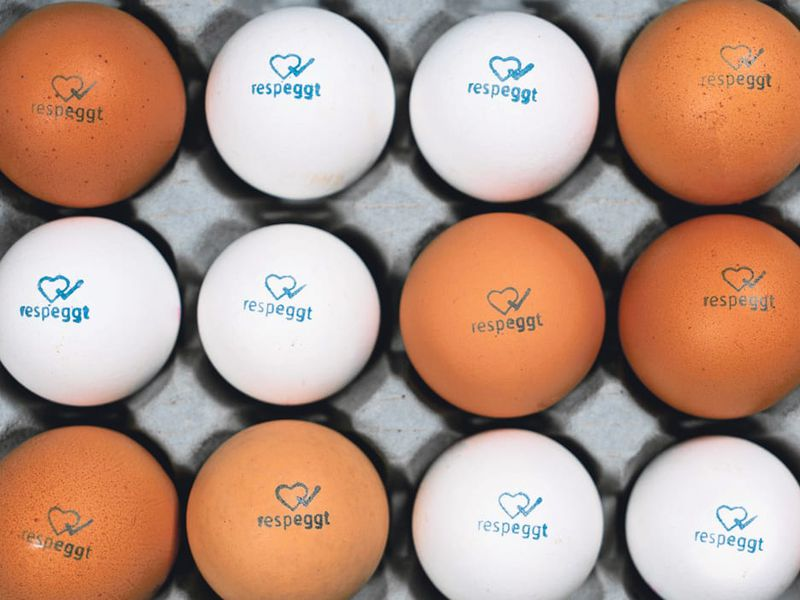 A German Grocery Chain Is Selling First Of Its Kind No Kill Eggs