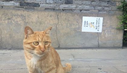 Protesters Prevent Chinese Museum From Evicting a Family of Cats