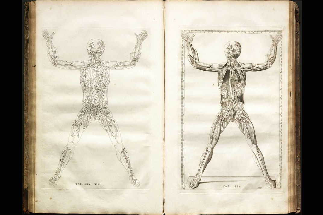 The Grisly Details Of Early Anatomy Textbooks At The Smithsonian