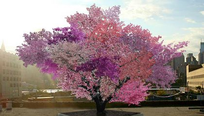 A Tree Grows 40 Different Types of Fruit