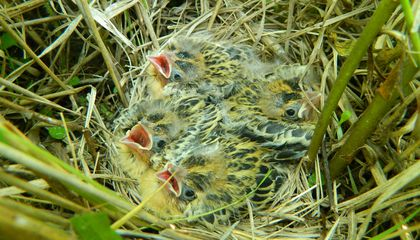 These Teen Birds Love Sleeping In, Too