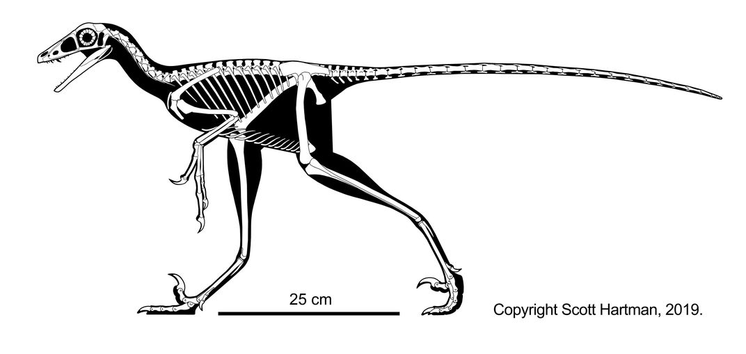 Skeletal Reconstruction