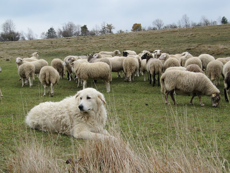 Europe's First Dogs Disappeared After Neolithic Farmers Arrived With Their Own Pups