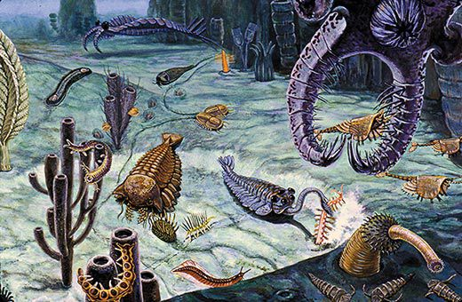 an introduction to the history of the cambrian period Solar radiation and the evolution of life  introduction life on earth can be  oceans by the end of the cambrian period,.