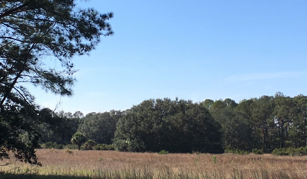 On the edge of the field was another gigantic live oak. Its muscular branches extending far, they seemed to protect a small community of palmetto in its shadow.