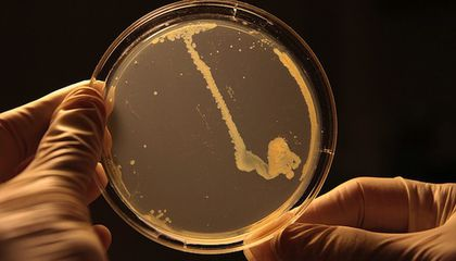 You Should Be Really Scared of the CDC's 'Nightmare Bacteria'