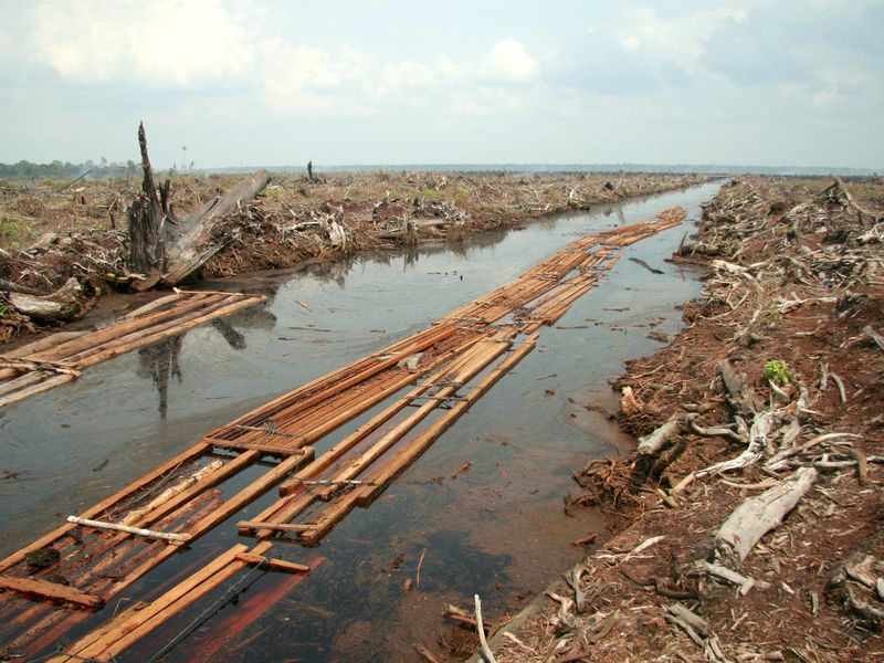 A photo of a demolished peat forest in Indonesia. There aren't any trees or shrubs left, only branches piled on top of each other. A river runs through the photo with pieces of sawnwood floating on it. The deforested area stretches to the horizon, where i
