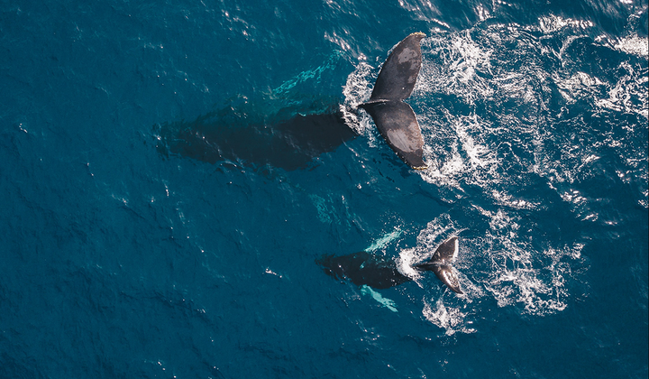 Good news is out there – if you look for it. For instance, just this month scientists announced that we are on our way to recovering oceans by 2050.