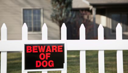 Postal Workers Are Bitten By Dogs Nearly 6,000 Times Per Year