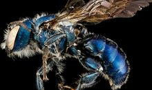 Bee-utiful! The Stinging Insect Gets a Close-Up