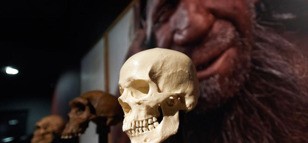 Caption: Early Human Ancestors Evolved Ability to Speak