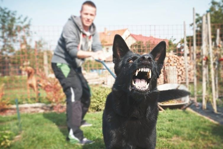Being attacked by a dog or seeing someone else attacked by a dog triggers fear.