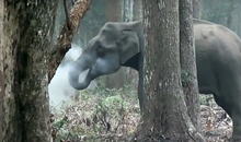 Why This Elephant in India Is Blowing Smoke