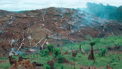 Norway Is Paying Liberia To Stop Deforestation