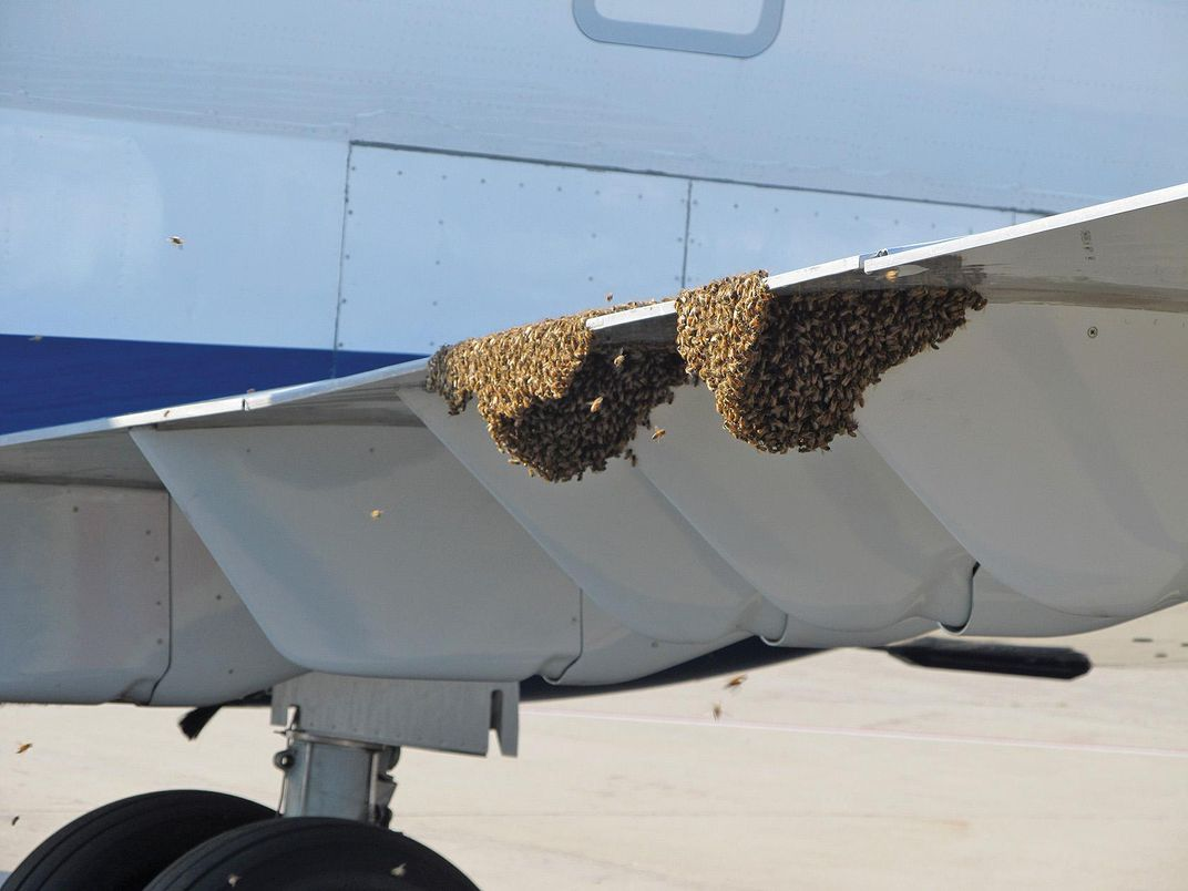 beehives on plane wing