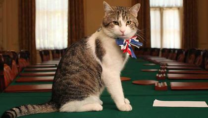 """10 Downing Street's """"Chief Mouser"""" Is Keeping His Job Despite Brexit"""