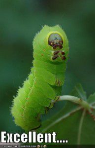 20110520083158funny-pictures-caterpillar-makes-tv-reference-193x300.jpg