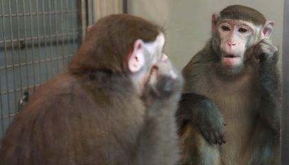 Monkeys Can Learn to Recognize Themselves in the Mirror