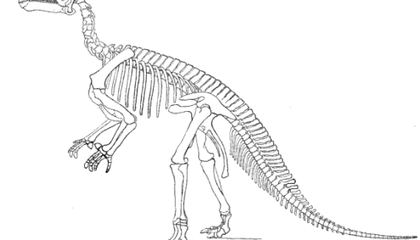 Pulling Back the Curtain on Dinosaur Science