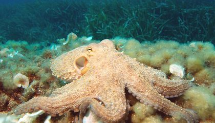 Like Octopus Skin, This New Material Goes From 2D to 3D in Seconds