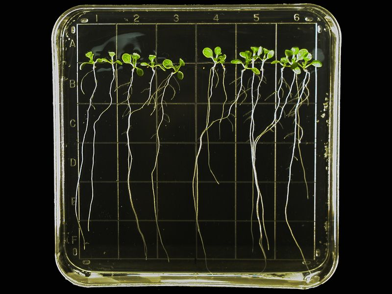 """Seeds May Use Tiny """"Brains"""" to Decide When to Germinate"""