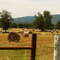 Looking out across the pasture on a summer day