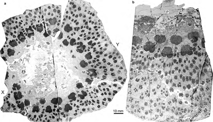"""Ancient Trees """"Ripped Their Skeletons Apart"""" To Grow"""
