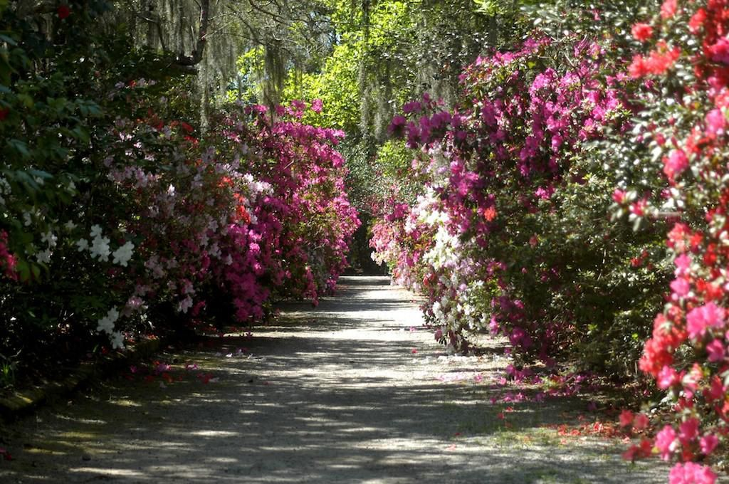 The Southern Romance of the Nation's Oldest Public Garden ...