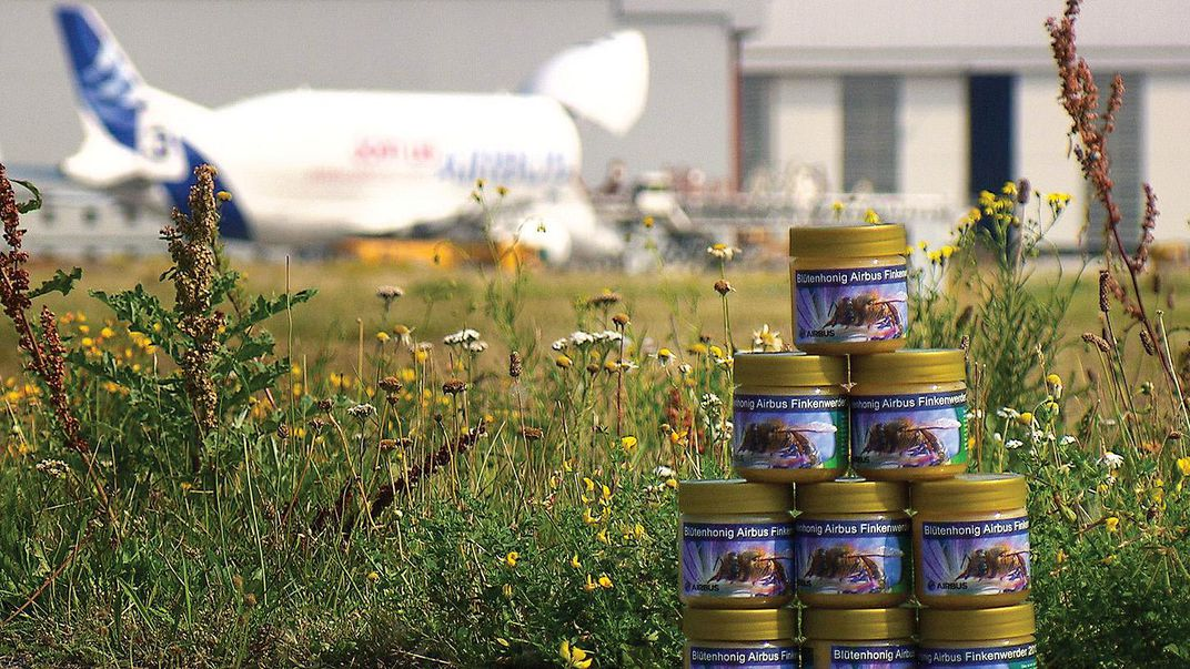 honey cans in front of airplane and plants
