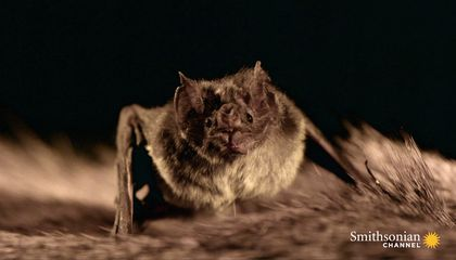 The Strange Link Between Bats and Tequila