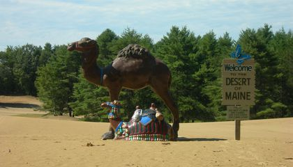 Desert of Maine, camels