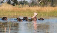 Tailor-Made Travel to Botswana description