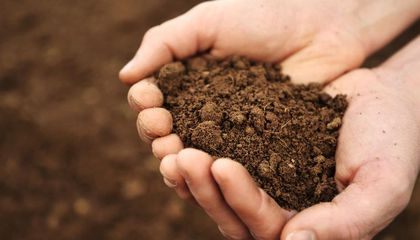 Image: Soil has a microbiome, too