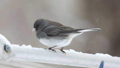 City Birds Are Evolving To Be More Flexible and Assertive Than Their Country Cousins