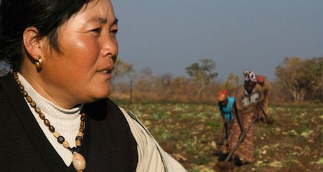 The sister-in-law of a Chinese farm owner