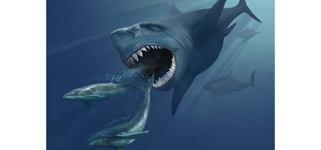 Caption: Ferocious Megalodons Were Raised in Nurseries