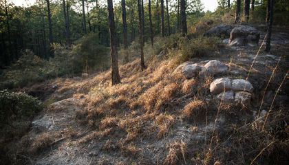 Kisatchie Hills Wilderness