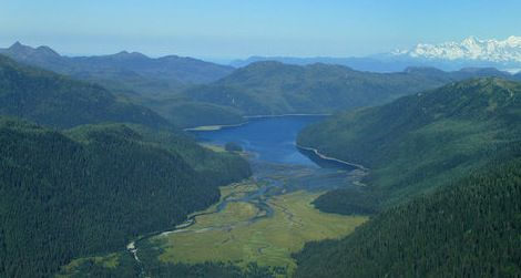 Greenland may eventually resemble the lush Tongass National Forest in Alaska.