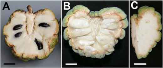 20110520090234fruit-seeds-pnas.jpg