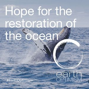 Hope for the restoration of the ocean
