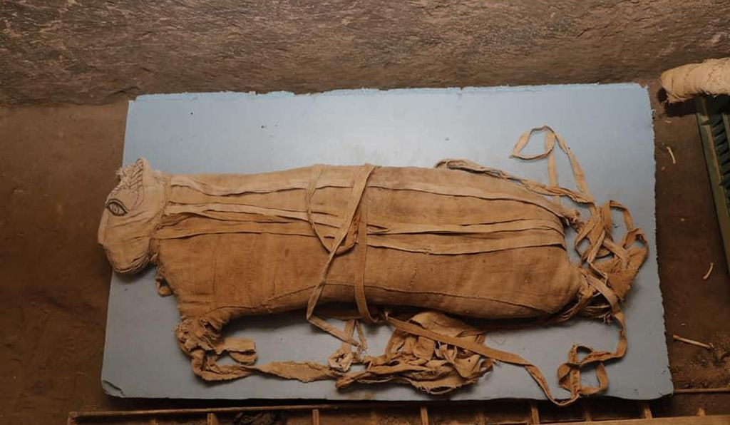 One of the lion cub mummies found in Saqqara