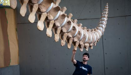 How to Give Dead Animals a Second Life: The Art of Skeleton Articulation