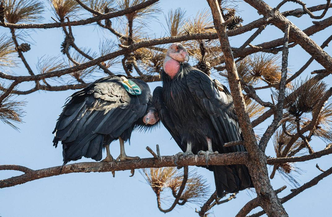 A pair of adult males