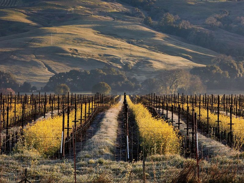 This Secret Corner of California Is a Paradise for Lovers of Great Food and Top-Notch Wines