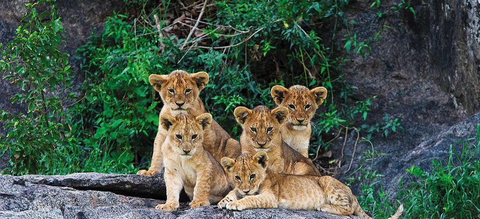 Tanzania Safari: A Family Journey <p>Explore the African wilderness on a fabulous family safari in search of the &quot;Big Five&quot; on the Serengeti. Our safari is choreographed for families so that everyone has a great time, from children to parents to grandparents.</p>